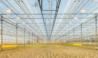 Pflanzenwachstum Beleuchtung